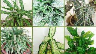 Plantas que não Necessitam de Sol Frequentemente