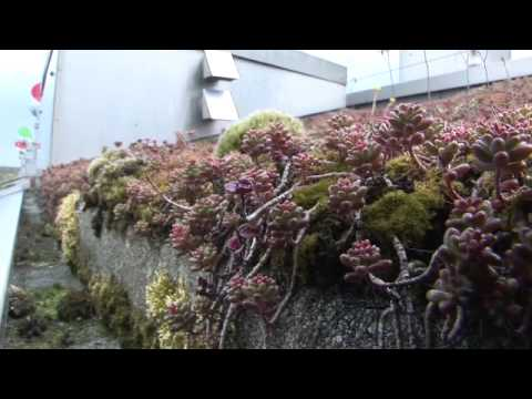 4 Of 6: BedZED - Sustainable Water Management And Biodiversity