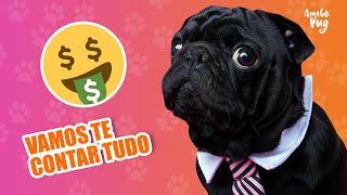 Porque o Pug é tão caro? | Amigo Pug
