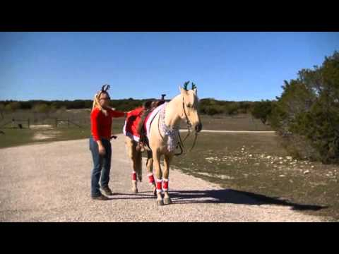 G-Lo may still be for sale – please check our website. Palomino, 5 year old mare for sale in Texas