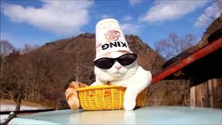 Крутой Кот Подборка Cat like a Boss Compilation   Муркотики 8