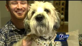 Pet-sitting websites offer new option for owners