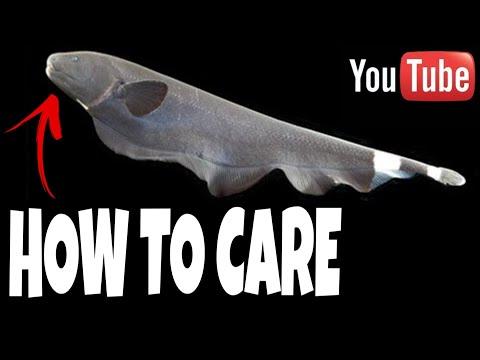How To Take Care Of Black Ghost Knife Fish | Prathmesh Aquatics