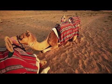 Dubai desert conservation reserve. Al Maha hotel