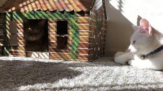 Cats Go On Cabin Retreat!