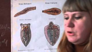 урок биологии 11 класс\