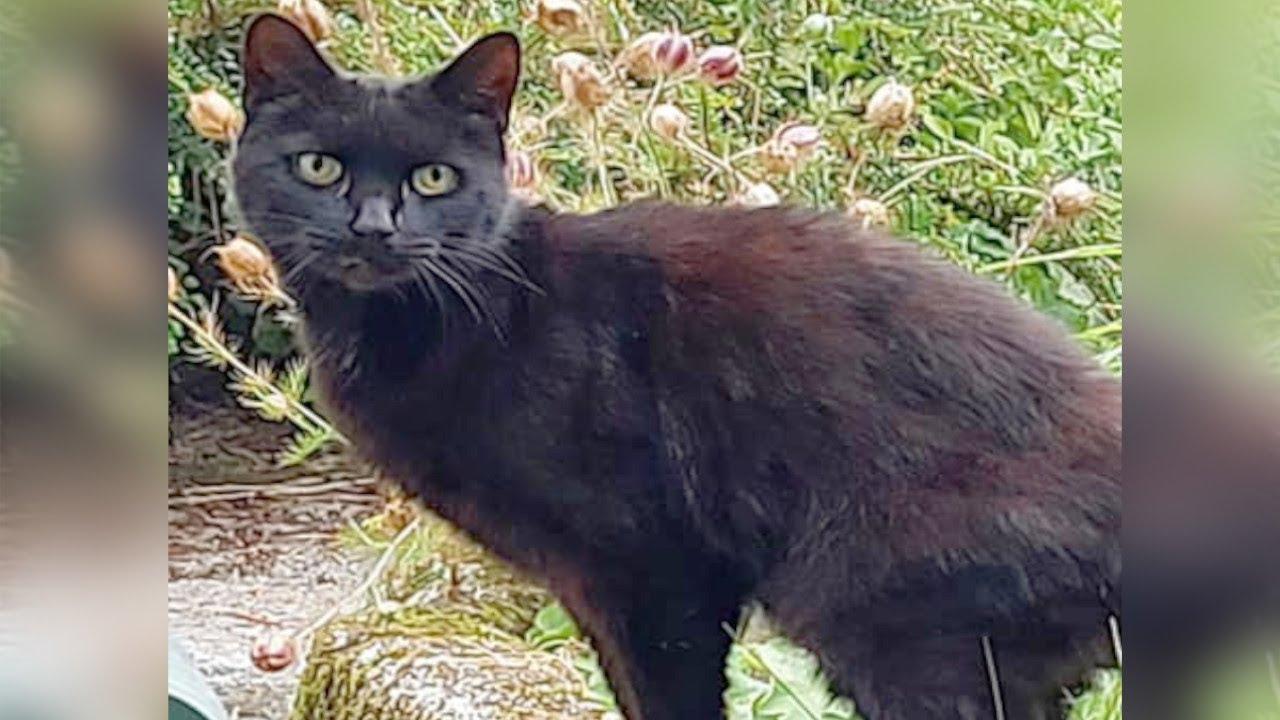 助けを求める黒猫。谷に落ちた飼い主を救う為、人を呼びに行った猫の行動に胸が熱くなる【感動 動物】