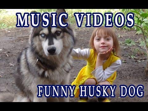 Funny husky dog – Music videos