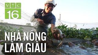 Bí quyết nuôi ếch sinh sản thành công 100% | VTC16
