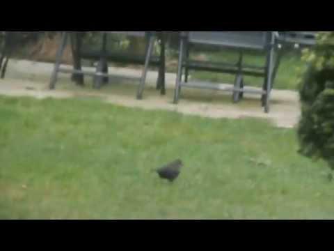 Project Vogels De Achtbaan Voorhout