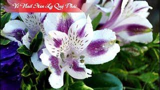 HỌC NAIL - Vẽ Nail Mẫu Gel Hoa Ly Trang Trí Đơn Giản