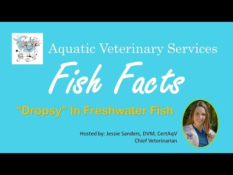 Fish Facts -