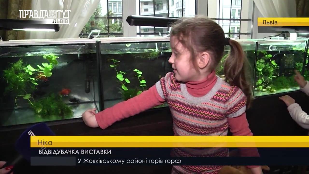 83350921174d49 Різнобарвні рибки гуппі. ПравдаТУТ Львів - YouTube
