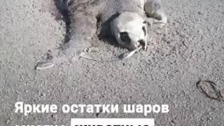 воздушные шарики убивают животных