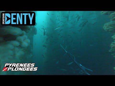 Chasse sous-marine Record du monde du Lieu Jaune au Polespear