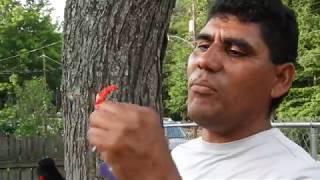 Carolina Del Norte: La Vida Típica De Los Inmigrantes De México