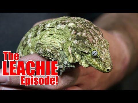 The LEACHIE Episode!