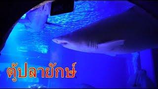 ตู้ปลายักษ์ ที่ญี่ปุ่น III น้องดาวพาเที่ยว