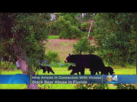 Deuce - 9 Arrests In Connection With Vicious Black Bear Abuse In Florida