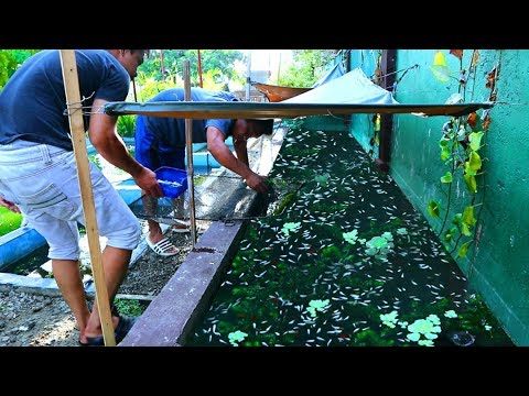 You Won't Believe This!! Thousands Of Fish Overloaded In My Fish Tank (FULL FARM TOUR)