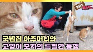 [TV 동물농장 레전드] '국밥집 아주머니를 지키는 고양이 보디가드 모자' 풀버전 다시보기 I TV동물농장 …