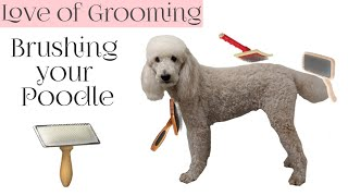 How to Brush your Poodle | Which Brushes and Combs to use on Poodles