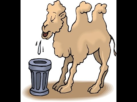 How camel survive without water