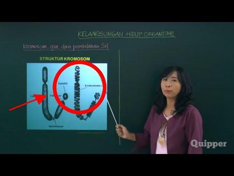 kromosom,-gen,-dan-pembelahan-sel---biologi-kelas-11-|-quipper-video