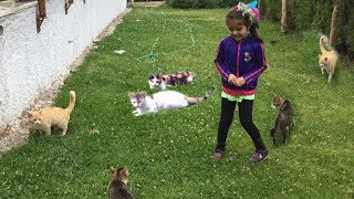 Eflin wendy pretend play with Cute Cats Funny video for kids