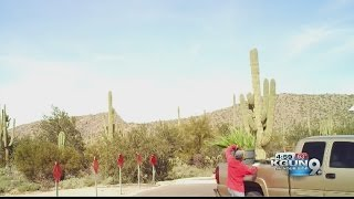 Authorities searching for cacti thief