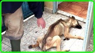【衝撃】許せない!生まれてから10ヶ月間、食事も与えられず閉じ込められていた犬…痩せ細り衰弱しても、その犬は生きることを諦めなかった!【世界が感動!涙と感動エピソード】 thumbnail
