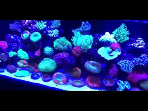 Majestic Aquariums reef tank compilation music by Paul Talbot