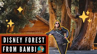 THIS FOREST Inspired DISNEY's BAMBI! ?? |  Visiting the Arrayanes Forest in Patagonia, Argentina ✨