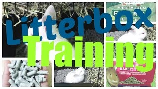 Bunny Litterbox Training | My Pawfect Family