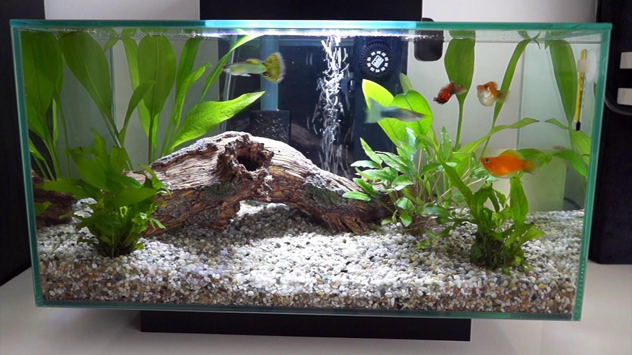 Fluval edge 23l fish tank update 2017 youtube for Fluval edge fish tank