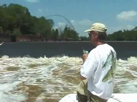 cape fear river rock fish lock d 1 0161 youtube