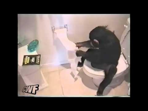 CuteWinFail: Monkey Toilet Win
