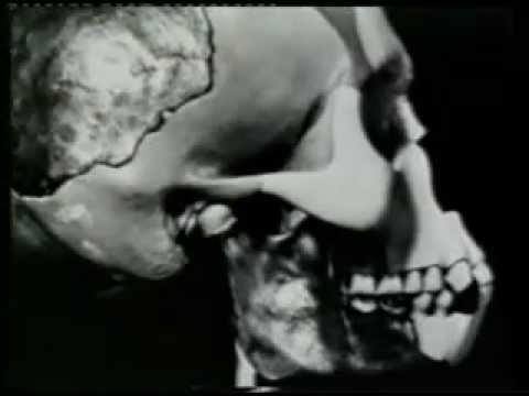 Image result for Piltdown Man youtube
