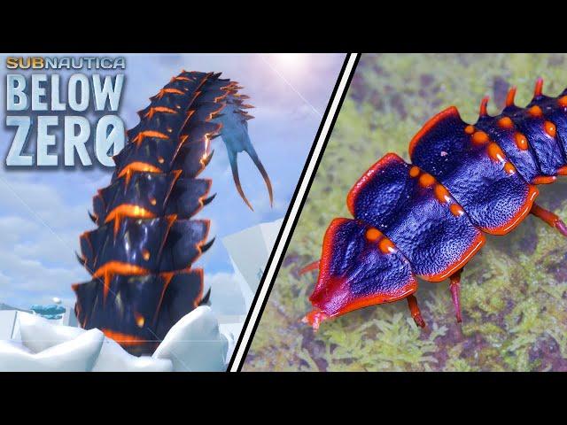 Subnautica Below Zero Creatures In Real Life! | Creature Counterparts