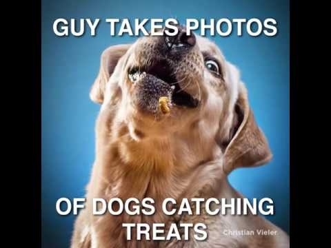 Wow! What these dogs catch dog treats by an amazing photographer