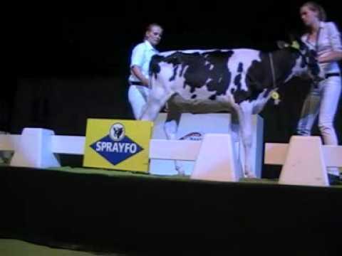 Holstein Master Sale Nr. 16