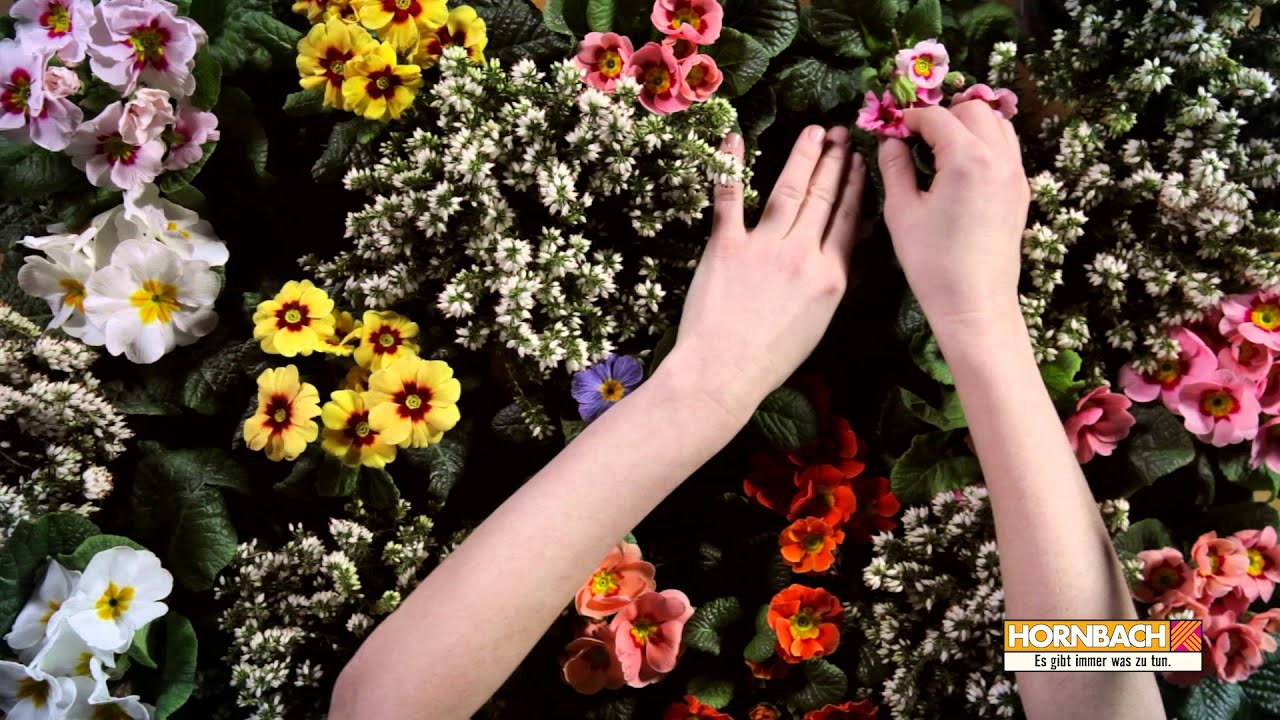 Hornbach Asmr Blumen Youtube
