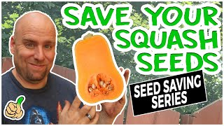 Saving Squash Seeds F๐r Next Year | Best Guide Ever