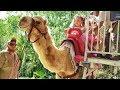 VLOG Едем в Зоопарк! Кормим Животных и катаемся на верблюде - Диана, Рома и Лера!
