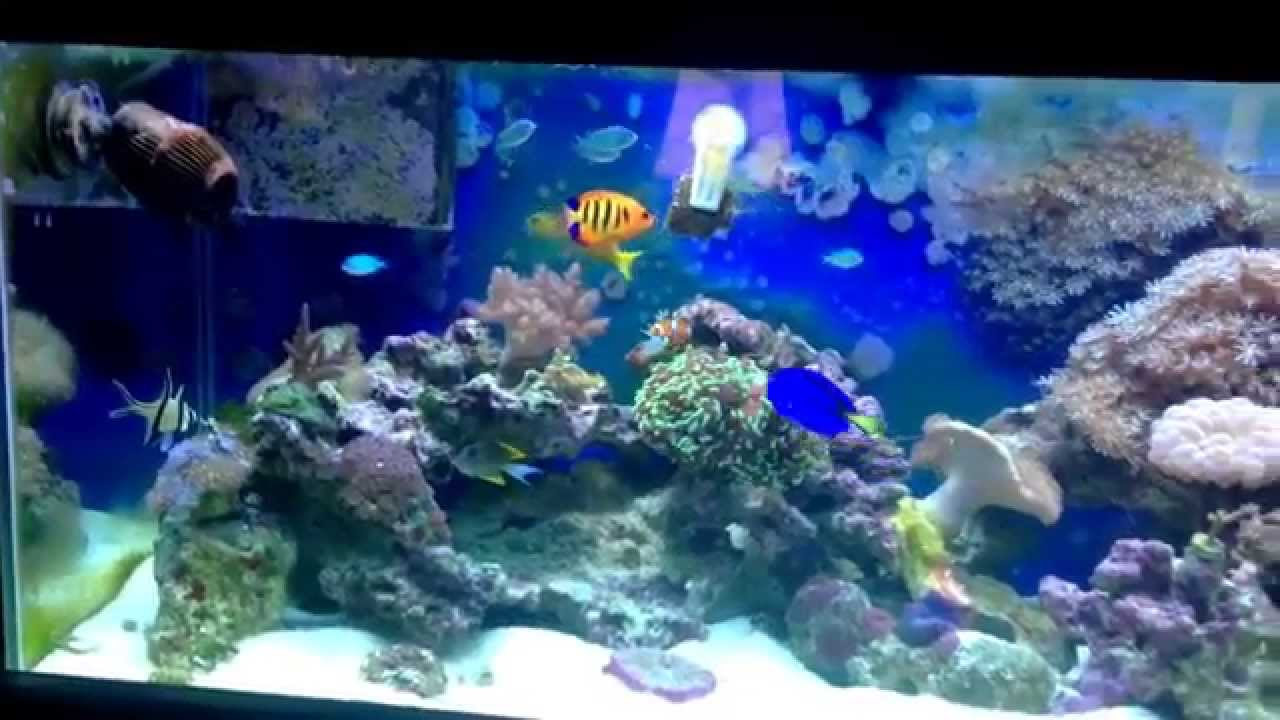 Saltwater fish tank 75 gallon youtube for Youtube fish tank
