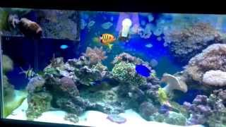 Saltwater Fish Tank 75 Gallon