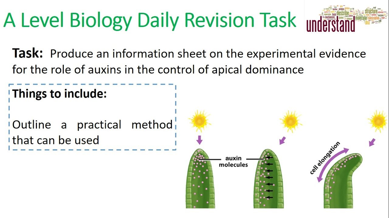 A Level Biology Daily Revision Task 21:  The roles of plant hormones - YouTube