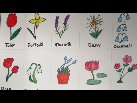 How to draw Different types of flowers | How to Draw & Coloring Flowers for Kids  Learn Flower Names