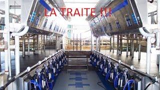 LA TRAITE [HD] !!!!