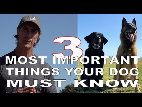 3 MOST Important Things Your DOG Must KNOW - Robert Cabral Dog Training Video